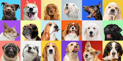 traits of dogs