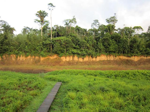 旅行 秘魯 亞馬遜河