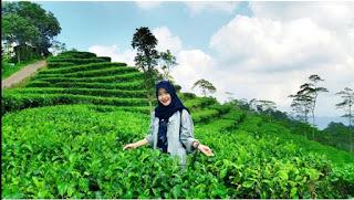 wisata kebun teh nglinggo jogja