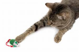 The Key to Successful Toys for Cats to Play with Alone