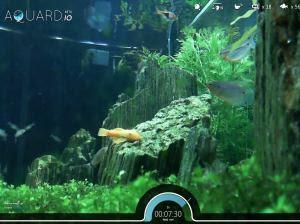 guarda i pesci nell'acquario reale