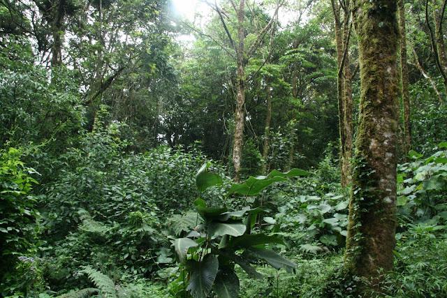 L'écotourisme et la préservation de l'environnement
