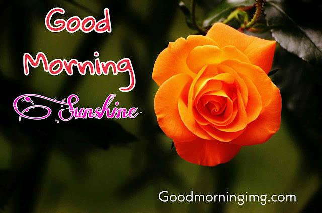 Good Morning Images With Orange Rose flower
