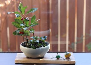 耳付きの板に載せられた白い鉢の山野草盆栽と大小二つのコマ
