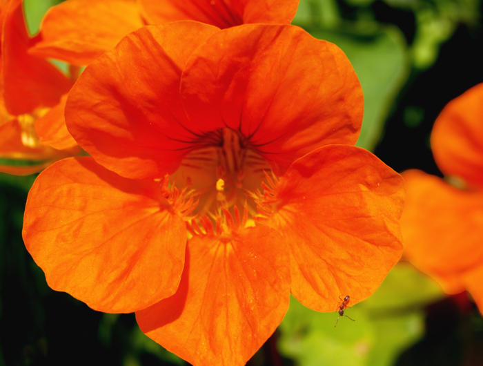 Flores Silvestres De Color Rojo Y Naranja