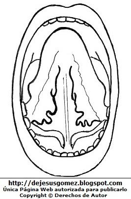 Dibujo de la lengua del cuerpo humano (Vista Inferior) para colorear pintar e imprimir. Dibujo de la lengua hecho por Jesus Gómez