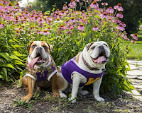 Western- Illinois- University's- Ray- and -Rocky- Launch- Fundraising- Effort -for- Local -Animal -Shelter