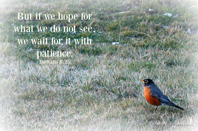 hope, bible verse, God's word, spring, signs of hope, patience, robin, http://bec4-beyondthepicketfence.blogspot.com/2016/04/sunday-verses.html