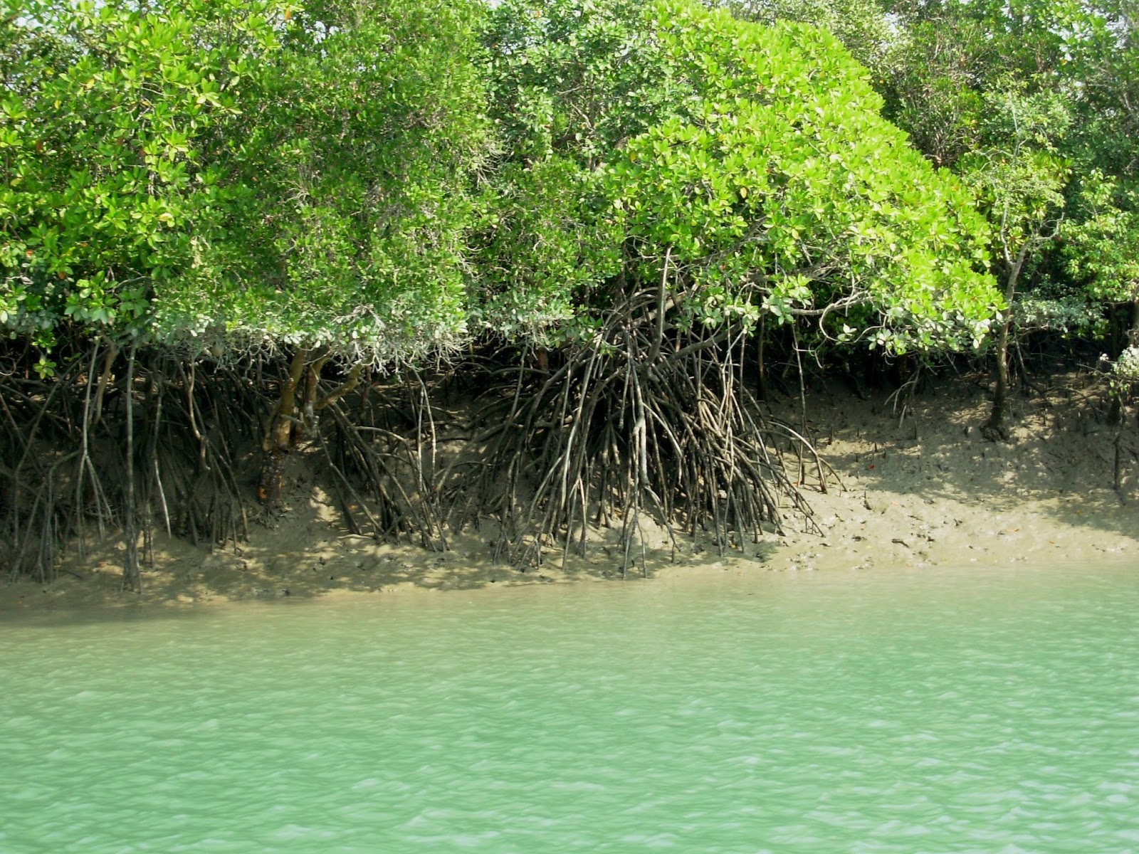 A Weekend Trip from Kolkata to Sundarbans
