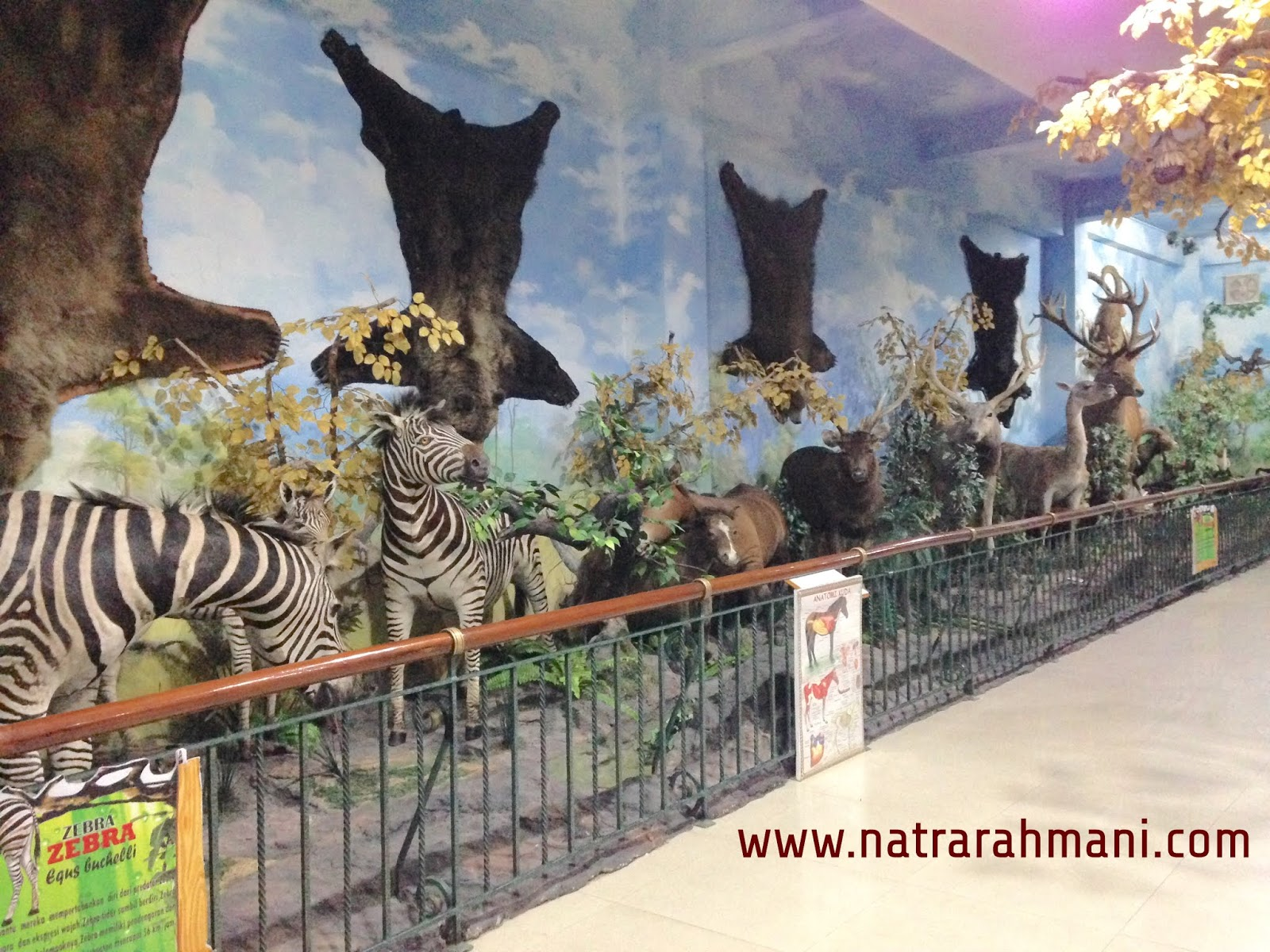 rahmat-international-wildlife-museum-gallery