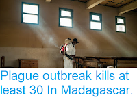 https://sciencythoughts.blogspot.com/2017/10/plague-outbreak-kills-at-least-30-in.html