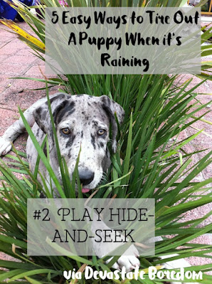 I wish I had known these when Kaylee was a puppy!  SO smart, and easy.  #2 - Play hide and seek! - 5 simple, minimal-effort ways to exercise your dogs when It's raining, hot out, or you're sick / pregnant / just freaking tired!  How to entertain a puppy without exhausting yourself in the process...