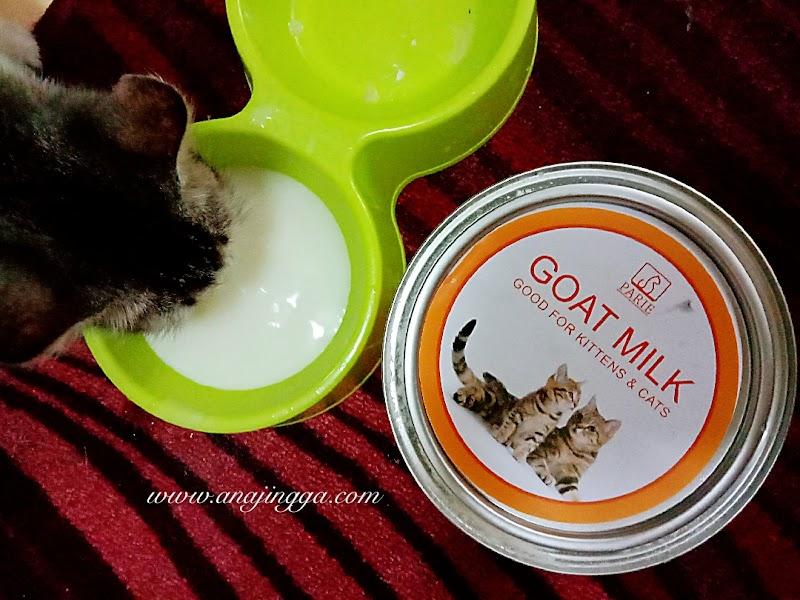 Kebaikan Minum Susu PARIE Goat Milk untuk kucing kesayangan
