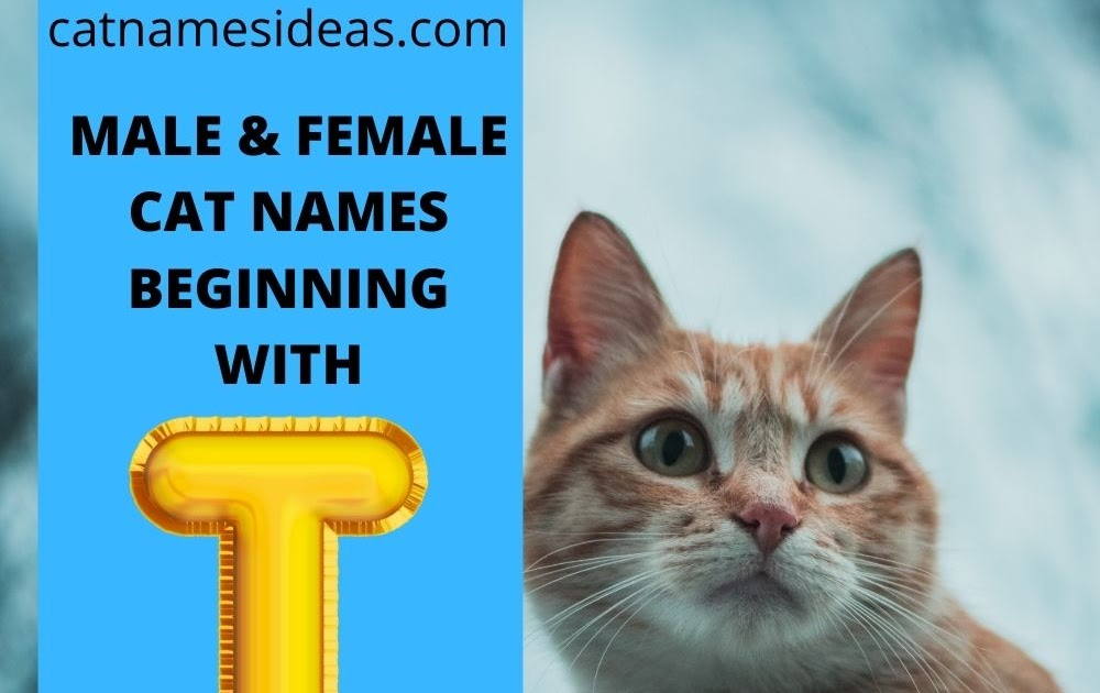 23+ Cat names that start with t ideas