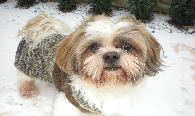 Τα σκυλιά έχουν κεντρικό σύστημα θέρμανσης...