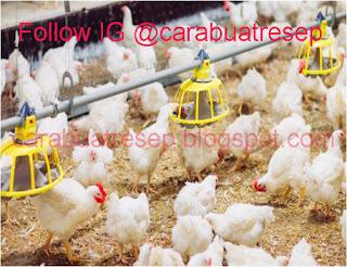 Foto Resep Pakan Ayam Pedaging atau Ayam Broiler Alias Ayam PotongSederhana Spesial Asli Enak Buatan Sendiri