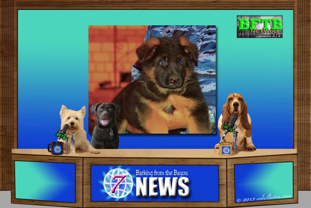 BFTB NETWoof News Top Story with three dogs and dog on screen