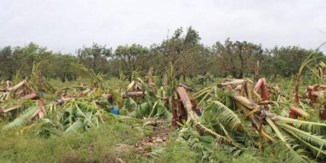 agricultura768x512 a96c006430080001be99310388762d5b - Confirman pérdidas cuantiosas en la apicultura tras paso de huracanes - El Apicultor Español: Actitud y Aptitud