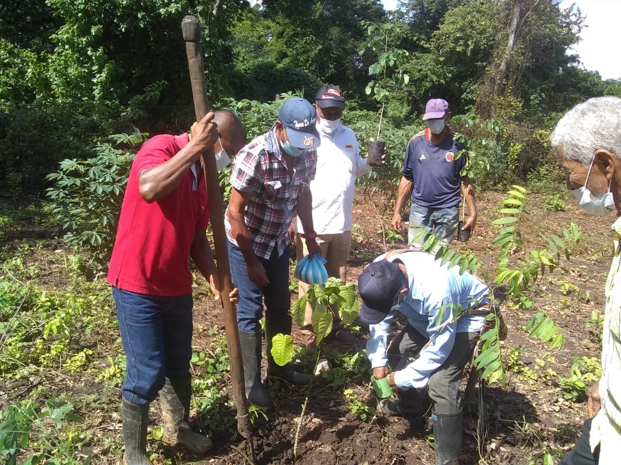 hoyennoticia.com, Nueve mil árboles fueron sembrados en Los Montes de Oca