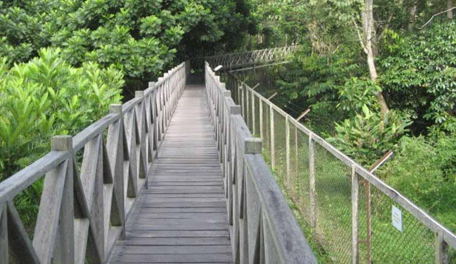 jembatan kayu ulin