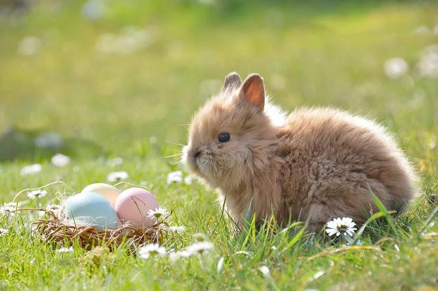 Easter Activity yang Tidak Boleh Dillewatkan Saat Merayakan Paskah