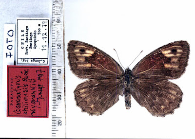 mariposas de la patagonia