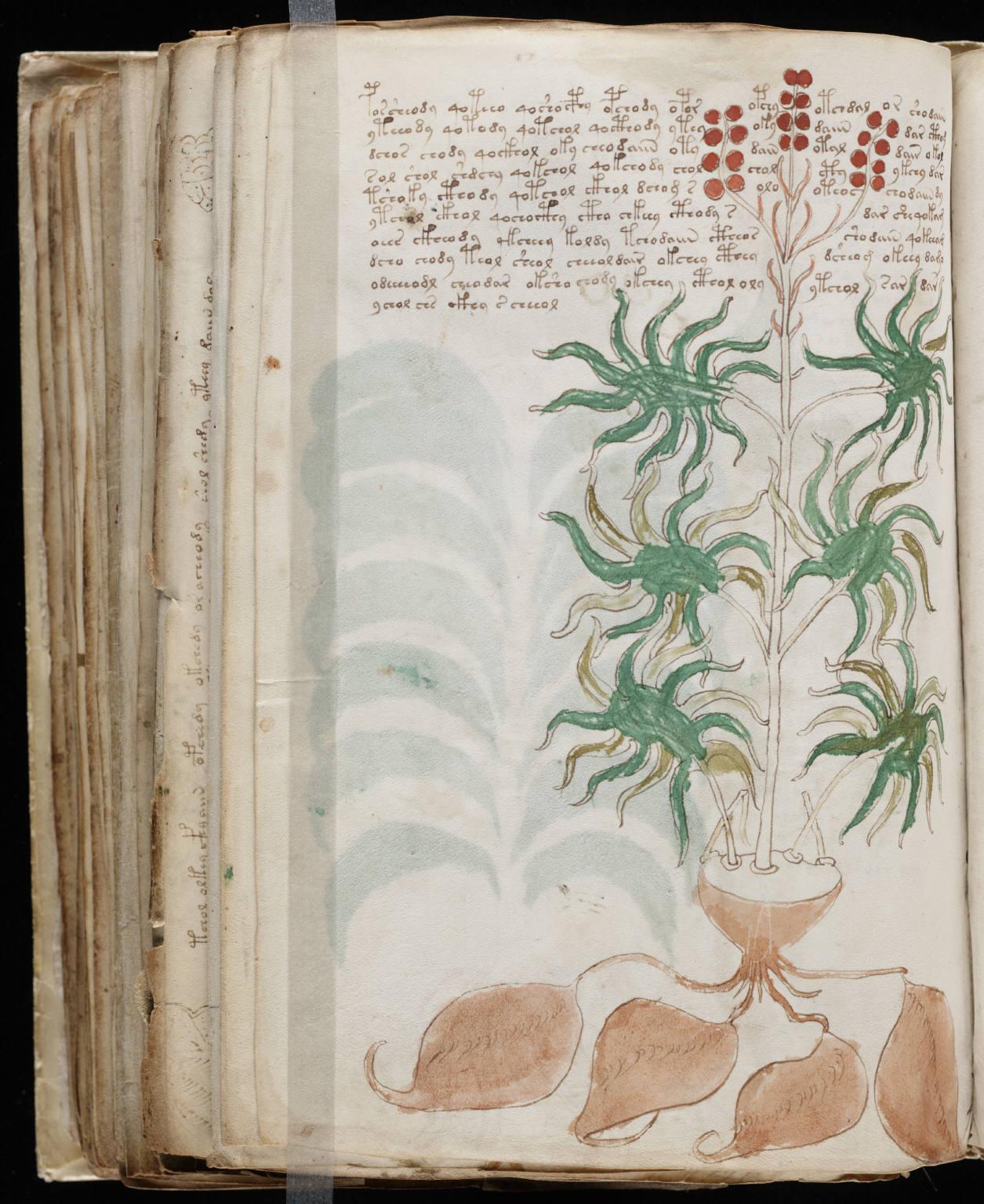 manuscrito166