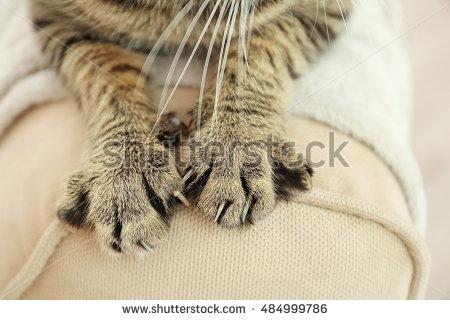 Kenapa ada orang yang tidak suka dengan kucing