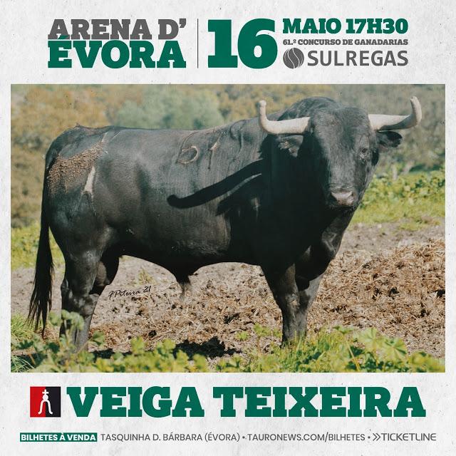 Os toiros de Veiga Teixeira e Branco Núncio para o Concurso de Ganadarias em Évora