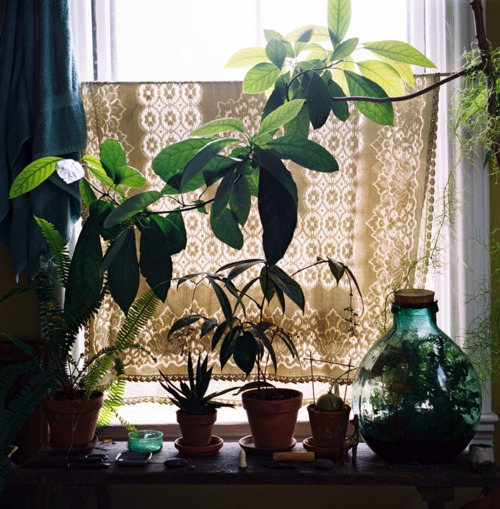 Houseplants On A Window