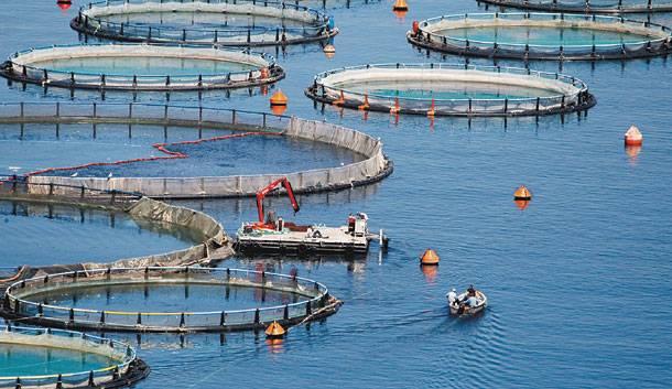 Θεσπρωτία: Oι εξαγωγές ψαριών των ιχθυοκαλλιεργειών της Θεσπρωτίας επεκτείνονται στη Γερμανία και στην Κεντρική Ευρώπη