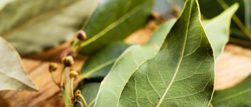 lovor-lovorov-list-lijek-iz-prirode-kašalj-grlobolja-upala-grla-prirodni-lijek-zdravlje