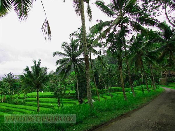 Inilah 20 Tempat Wisata Di Bali Selain Pantai Dan Pura