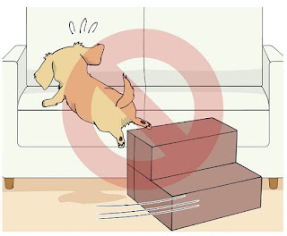 escadas de espuma para cães