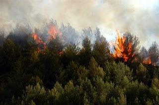 Ζαχάρω πυρκαγιά σε δασική έκταση στους Ταξιάρχες