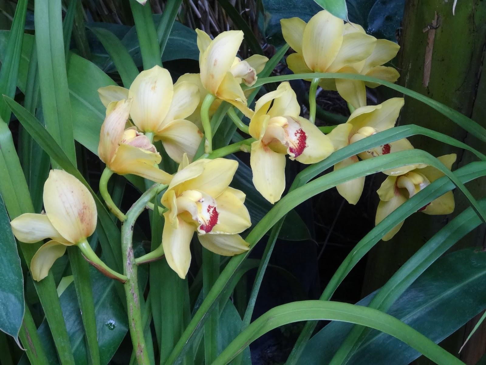 Exposition Mille & Une Orchidées au Jardin des Plantes Paris ~ Une ...