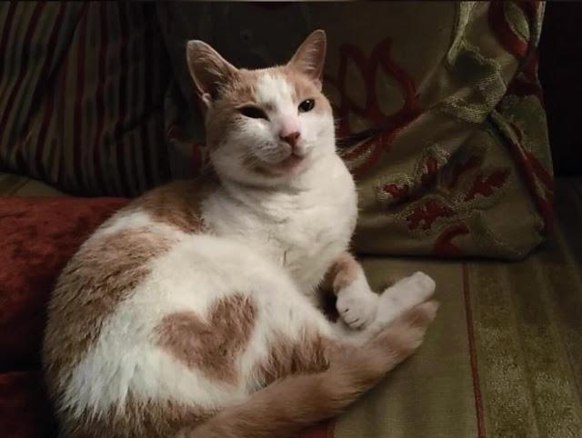 قطة مع علامة على شكل قلب,صور قطط,صور عن القطط,قطط مضحكة ,قطط جميلة ,قطط كيوت,