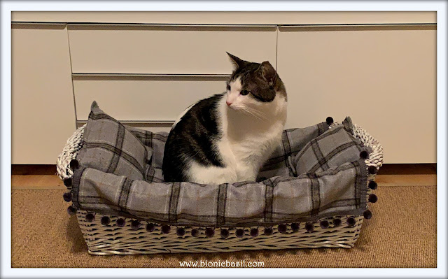 Feline Fiction on Fridays #108 at Amber's Library ©BionicBasil®Melvyn's Basket Make-Over