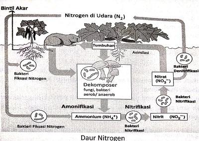 Materi Ekosistem dan Lingkungan (Rangkuman SBMPTN)