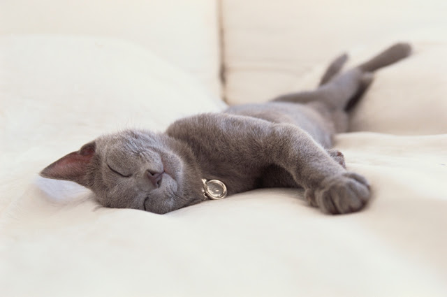 Putting A Cat To Sleep
