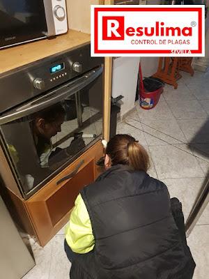 Control de plagas en Sevilla
