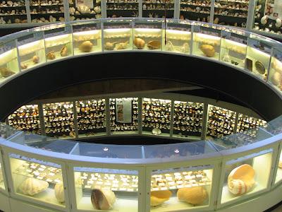 सागर शैल संग्रहालय दीव, sea shell museum diu