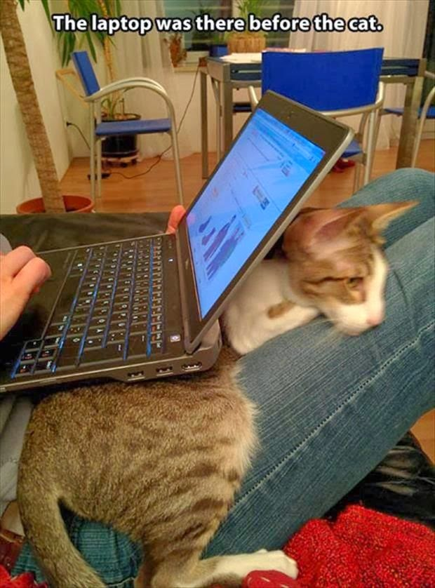 funny cat laptop