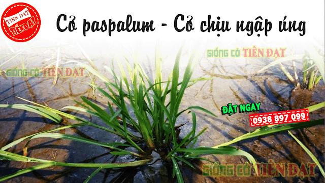 Đặc điểm nỗi bật cỏ paspalum