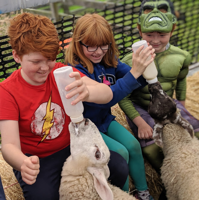 The Best Days Out in County Durham for Kids  - Hall Hill Farm