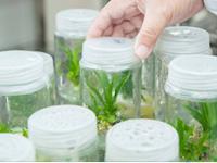 Pengertian, Prinsip Dasar dan Jenis-Jenis Bioteknologi – Biologi Kelas XII IPA SMA-MA