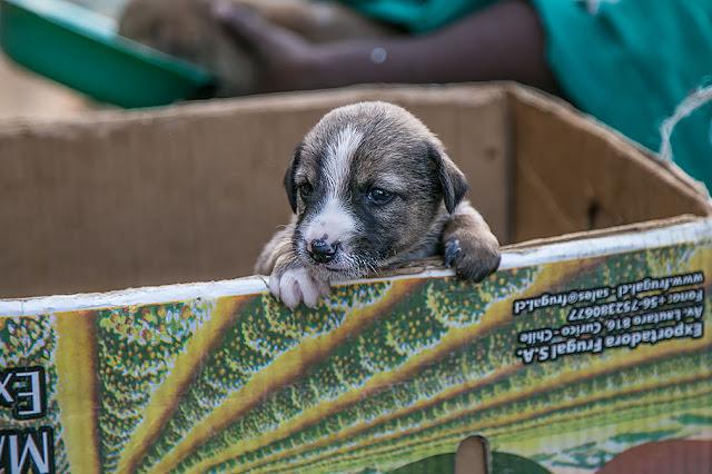 woman bangalore kr market dog pups