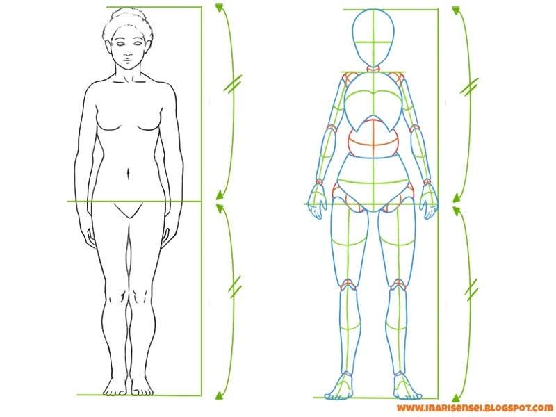 taille des jambes par rapport au corps