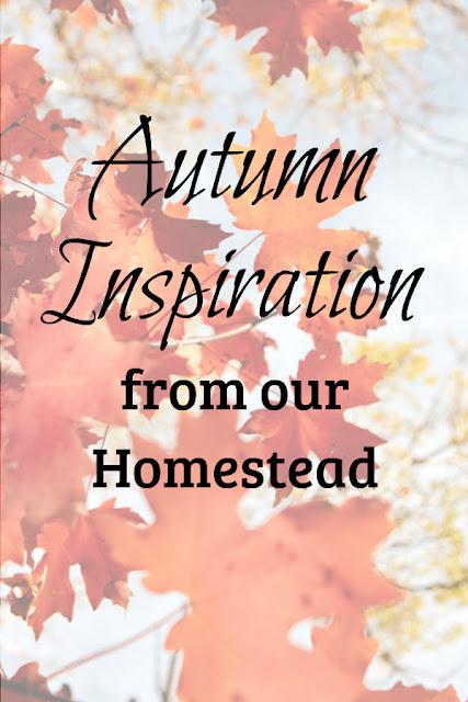 Autumn inspiration from our homestead.