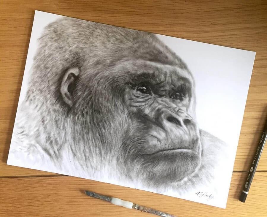 08-Silverback-Gorilla-Amber-Tyldesley-www-designstack-co